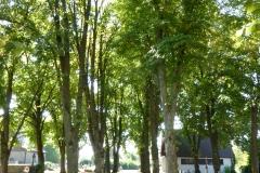Blick in den Friedhof mit seinen 22 großen Linden