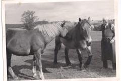Alter Bauer mit seinen Pferden