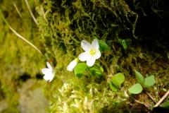 Kleine Blüten an der gefassten Quelle (Ende März)